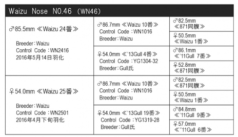 WN46血統構成表800