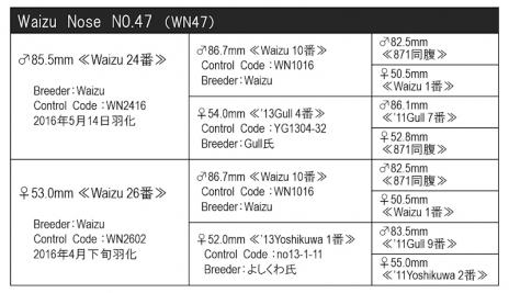 WN47血統構成表800