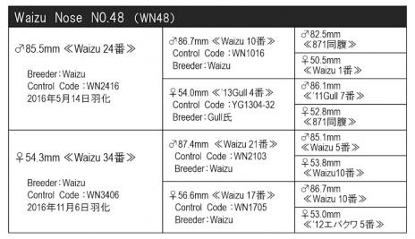 WN48血統構成表800