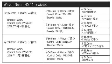 WN49血統構成表800