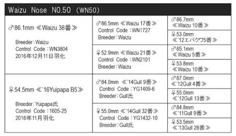 WN50血統構成表800