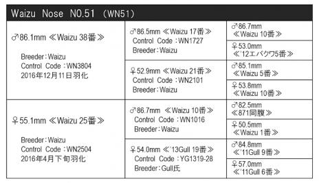 WN51血統構成表800