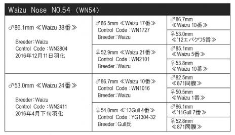 WN54血統構成表800