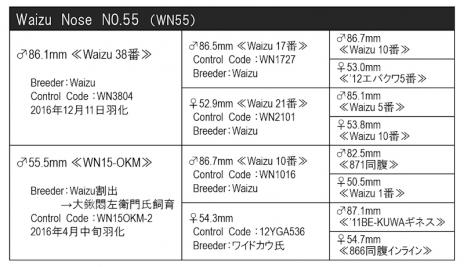WN55血統構成表800