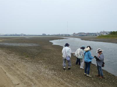 5 唐の原川干潟2