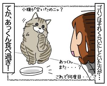 03082017_cat4mini.jpg