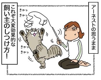 07092017_cat4.jpg