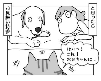 11072017_cat4mini.jpg