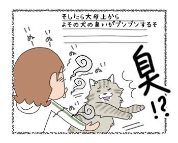 11092017_cat3.jpg