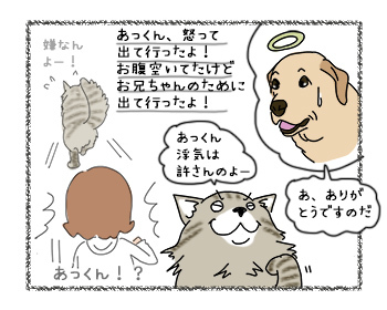 11092017_cat4.jpg