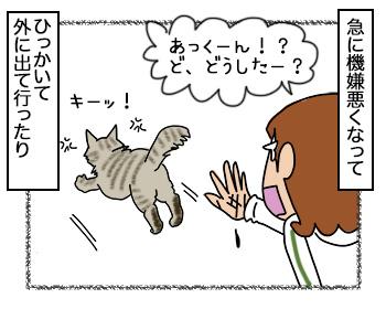 12092017_cat2.jpg
