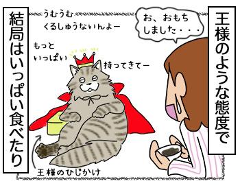 12092017_cat4.jpg