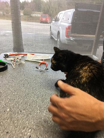 14082017_cat5.jpg