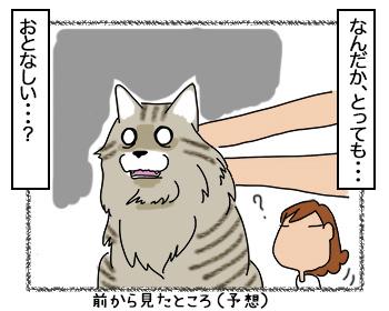 15082017_cat3mini.jpg