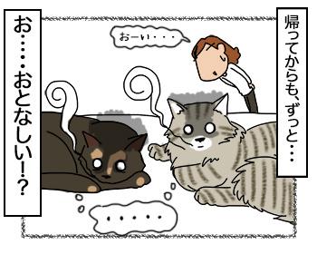 15082017_cat4mini.jpg