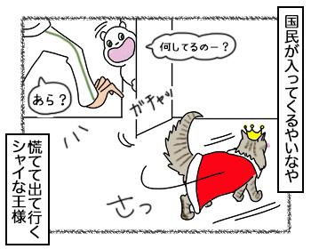 17092017_cat4.jpg