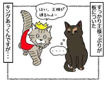 18092017_cat1.jpg