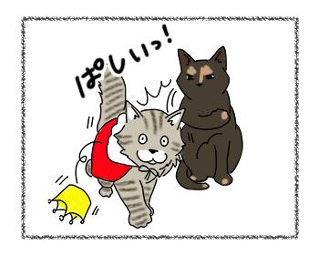 18092017_cat2.jpg