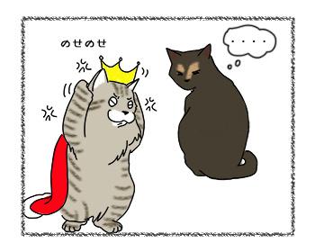 18092017_cat4.jpg