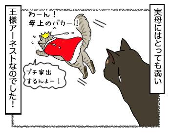 18092017_cat6.jpg