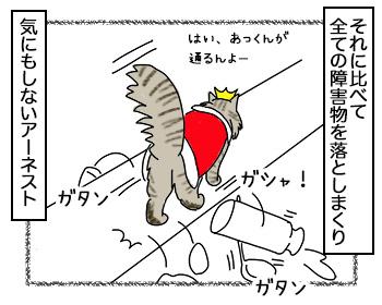 19092017_cat3.jpg