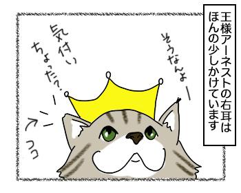 20092017_cat1.jpg