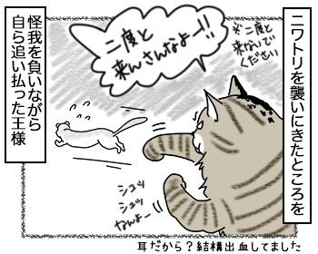 20092017_cat3.jpg
