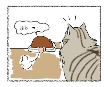 21082017_cat1mini.jpg