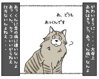 21082017_cat2mini.jpg