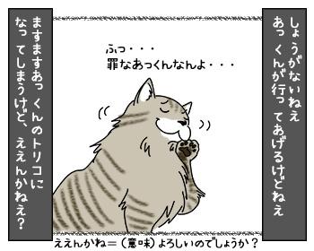 21082017_cat3mini.jpg