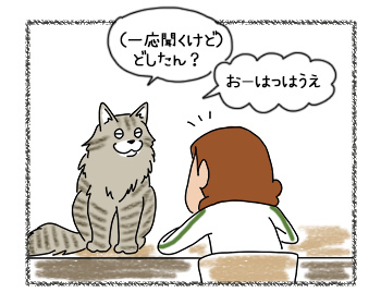 21082017_cat4mini.jpg