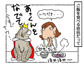 21092017_cat1.jpg