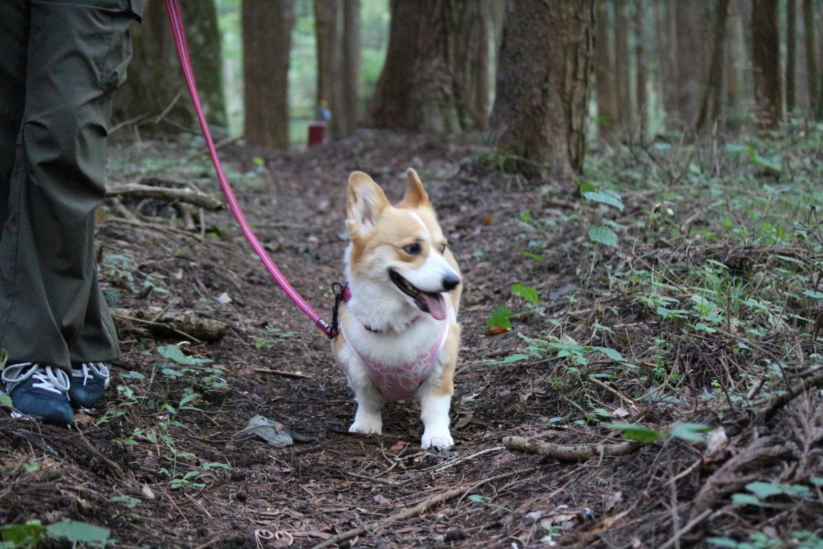 怪しの森3