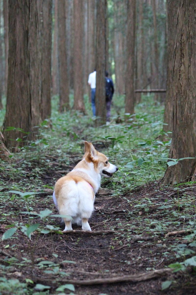 怪しの森6
