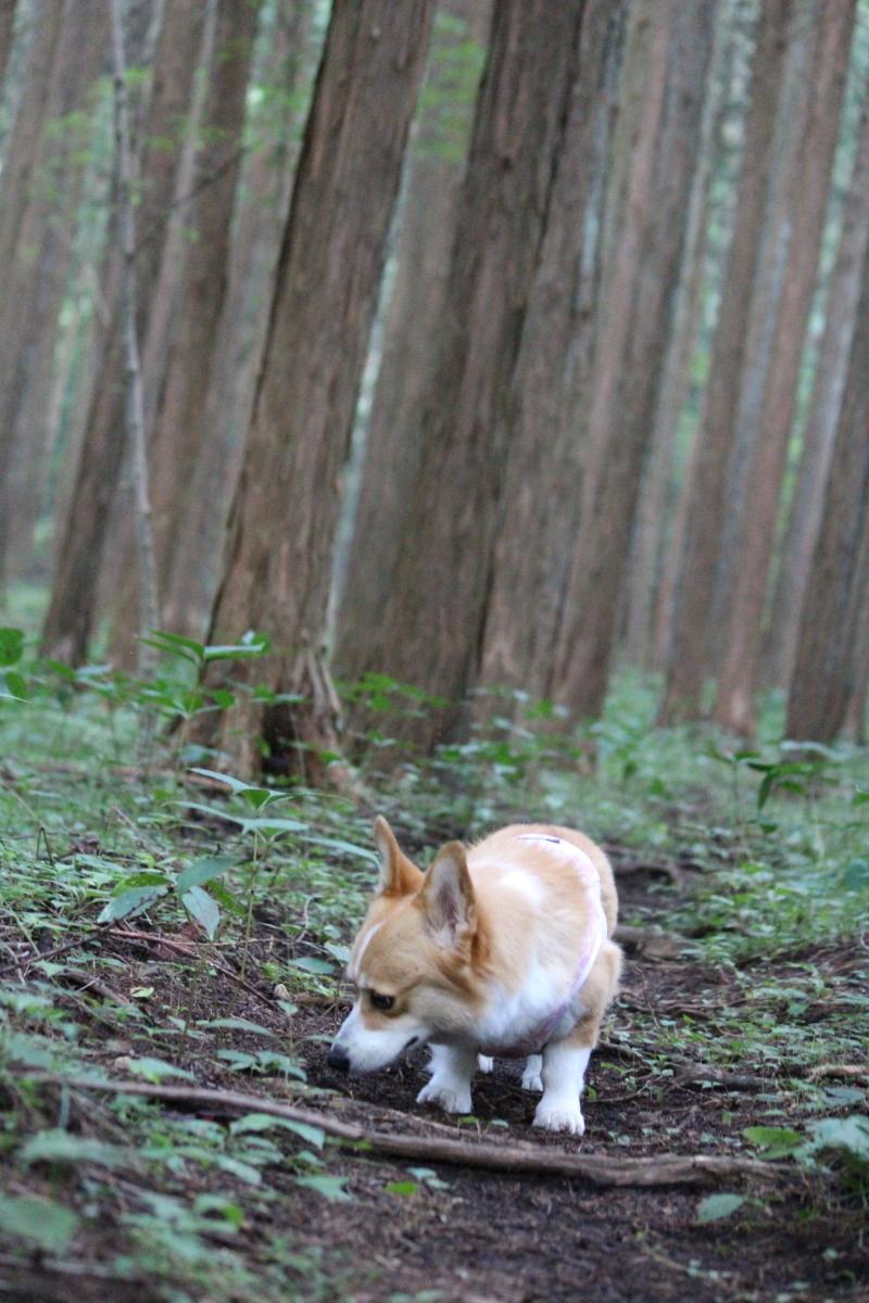 怪しの森7