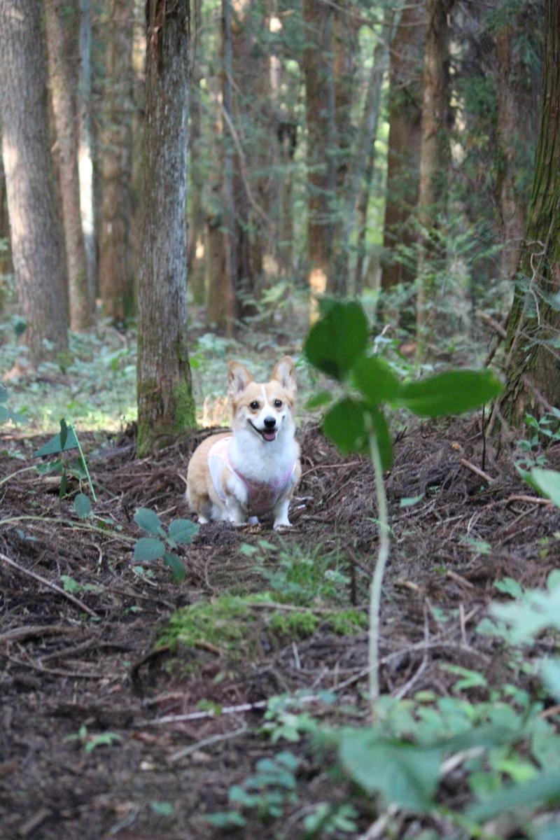怪しの森9