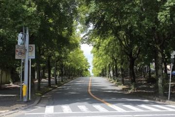 20170812三色彩道3_MG_5831