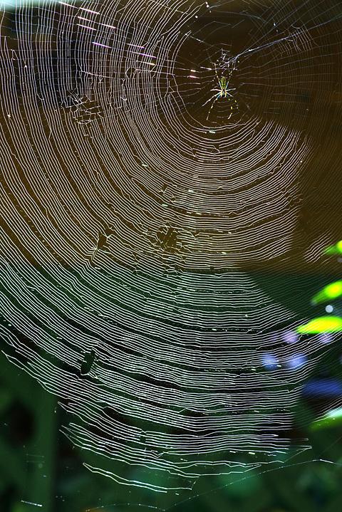 蜘蛛の巣織り