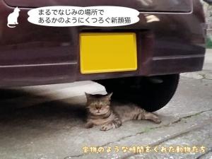 まるでなじみの場所であるかのようにくつろぐ新顔猫