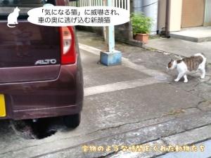 「気になる猫」に威嚇され、車の奥に逃げ込む新顔猫