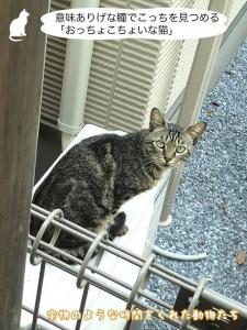 意味ありげな瞳でこっちを見つめる「おっちょこちょいな猫」