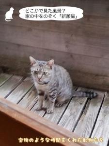 どこかで見た風景? 家の中をのぞく「新顔猫」