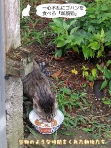 一心不乱にゴハンを食べる「新顔猫」