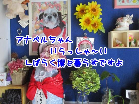 0717-11.jpg