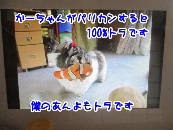 0817-10.jpg
