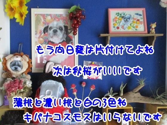 0906-09_2017090614213619f.jpg