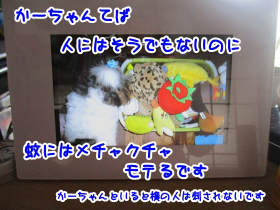0908-11_20170908155317e15.jpg