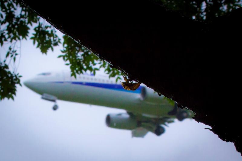 富山空港H29_8_12⑤