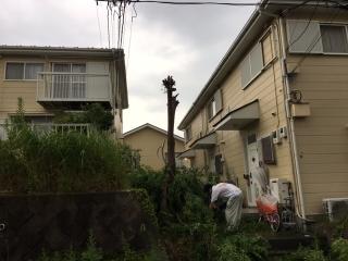 雑木伐採_02