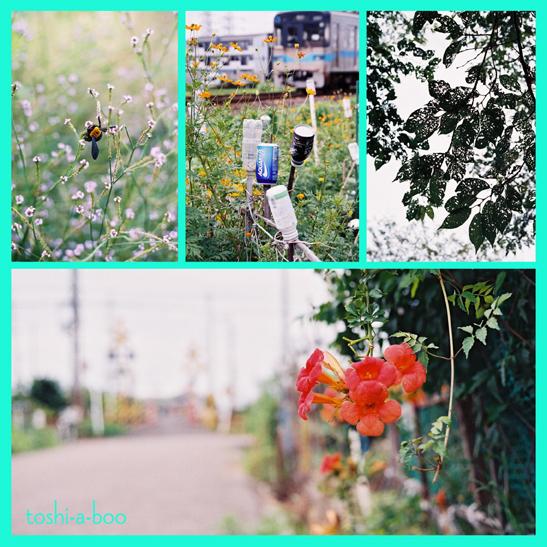 blog17summer.jpg